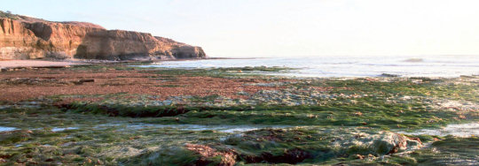 Garbage Beach at Low Tide